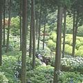 京都-三室戶寺2.jpg