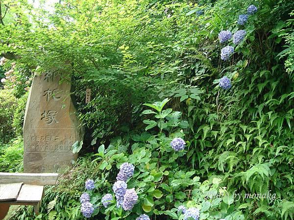 鎌倉-長谷觀音寺2.jpg