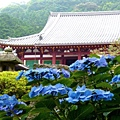 奈良-矢田寺1.jpg