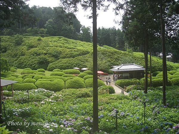京都-三室戶寺3.jpg