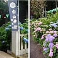 東京-白山神社.jpg