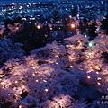 福島_鶴ヶ城 夜櫻