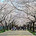 高田城公園