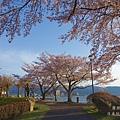 諏訪湖-賞櫻