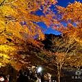 香嵐溪夜楓