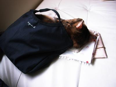 睡在工具包