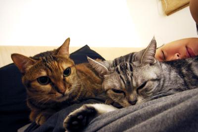 最喜歡和喵喵睡了