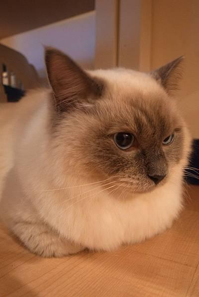 貓聚總是令喵不爽