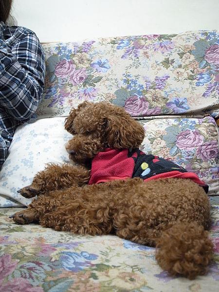 靠著的是我的枕頭耶~!!