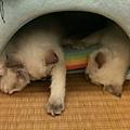 三個小朋友睡成一團