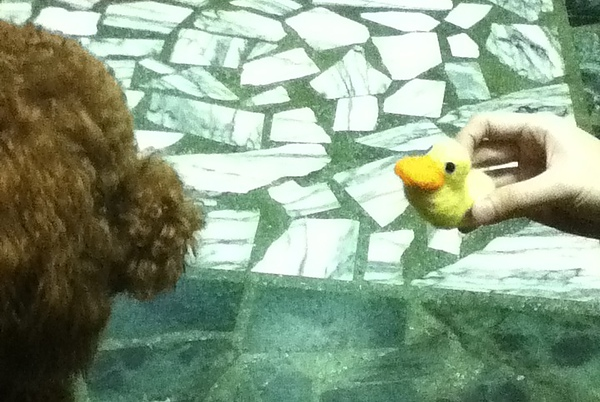 小鴨後來被殺死了