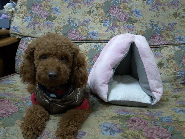 小蘿的小帳篷~