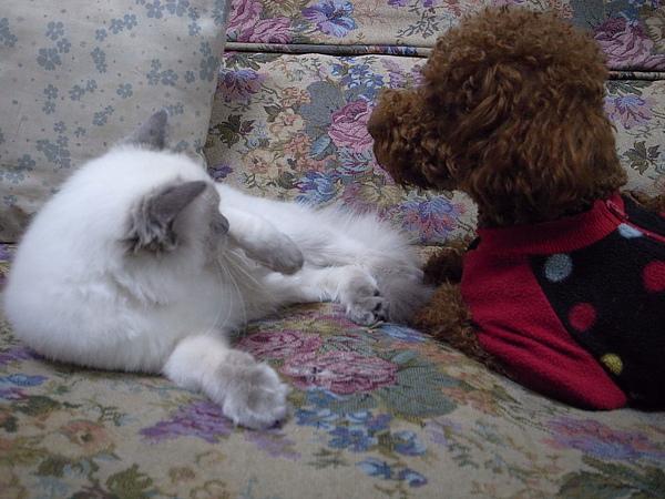 兩個小鬼最近愛打架~