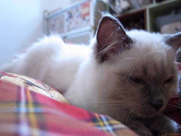 睡個好覺~!!