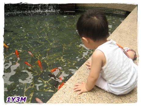 看魚2.jpg