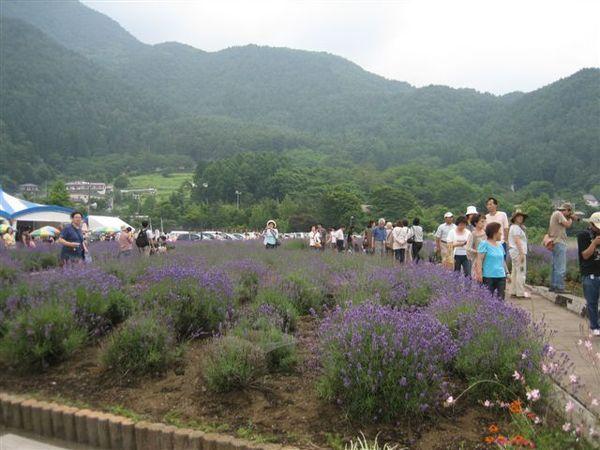 090.又是個幸運~剛好趕上河口湖的香草祭.JPG