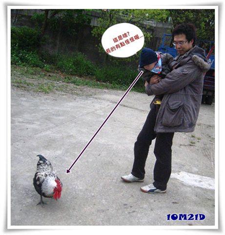 看雞.jpg