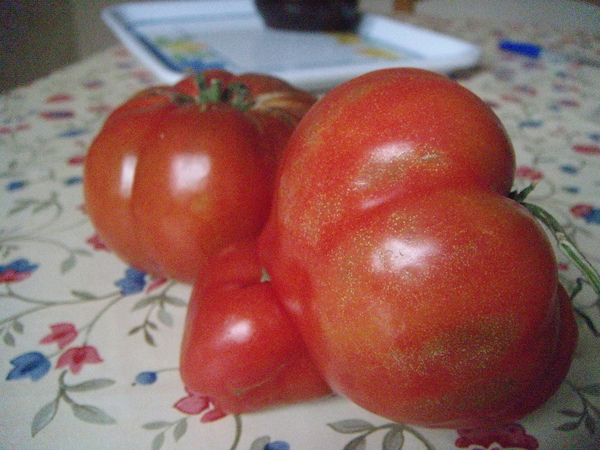 Oppido~countryside tomatos