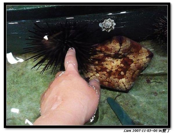海生館-海膽6手指被他吸住了