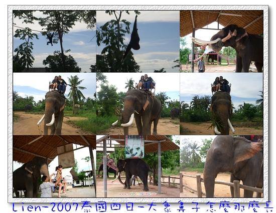 騎大象囉~~~