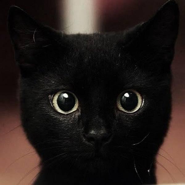 黑貓黃眼.jpg