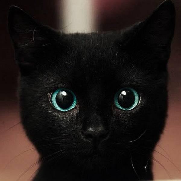 黑貓藍眼2