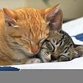 可愛小貓咪16
