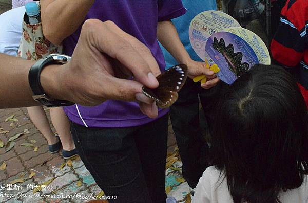 紫斑蝶&台灣獼猴 031_副本