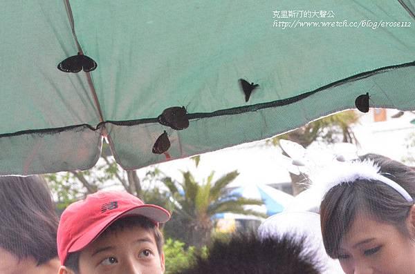 紫斑蝶&台灣獼猴 021_副本