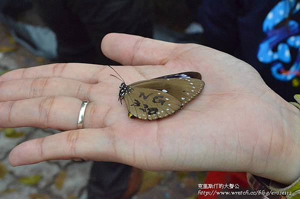 紫斑蝶&台灣獼猴 034_副本