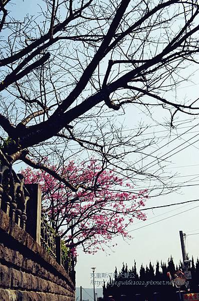 平菁街 022_副本.jpg