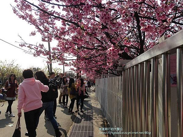 平菁街 124_副本.jpg