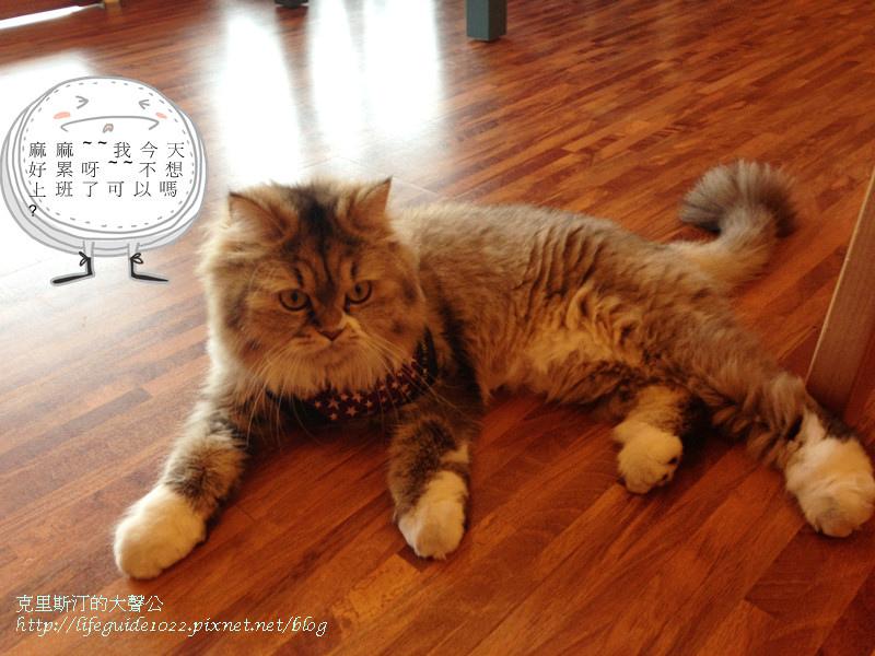 貓老闆 189_副本.jpg