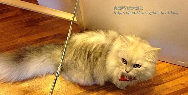 貓老闆 010_副本.jpg