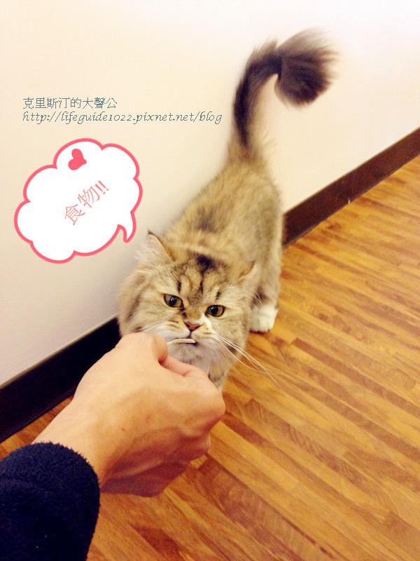 貓老闆 027_副本.jpg