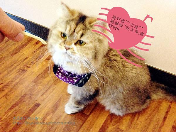 貓老闆 031_副本.jpg