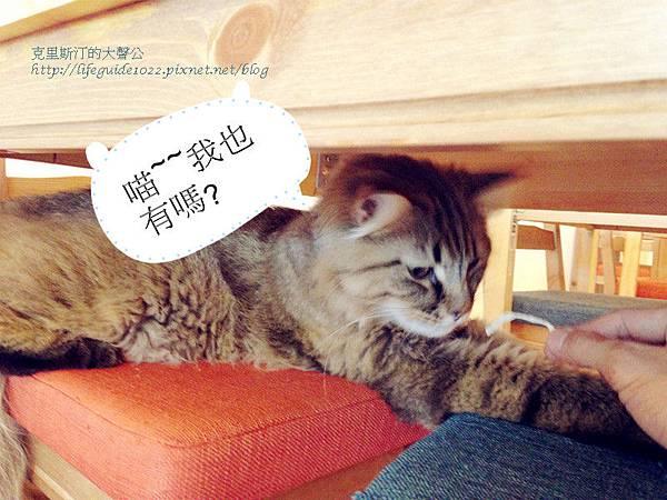 貓老闆 034_副本.jpg