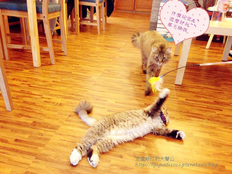 貓老闆 120_副本.jpg