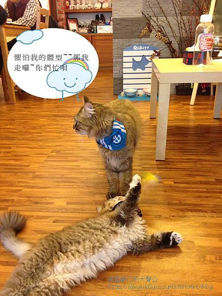 貓老闆 123_副本.jpg