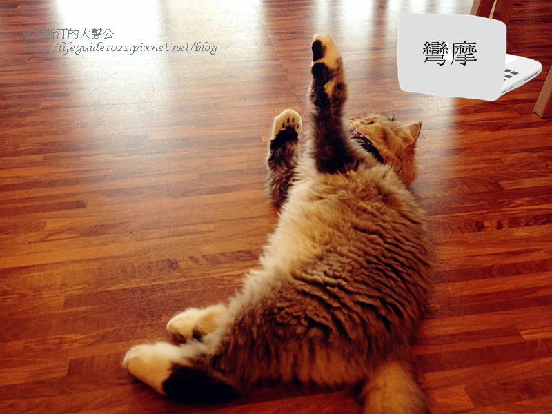 貓老闆 154_副本.jpg