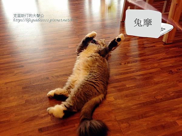 貓老闆 155_副本.jpg