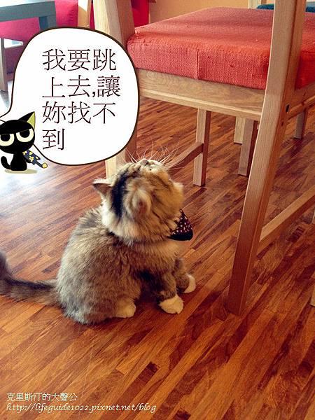貓老闆 168_副本.jpg