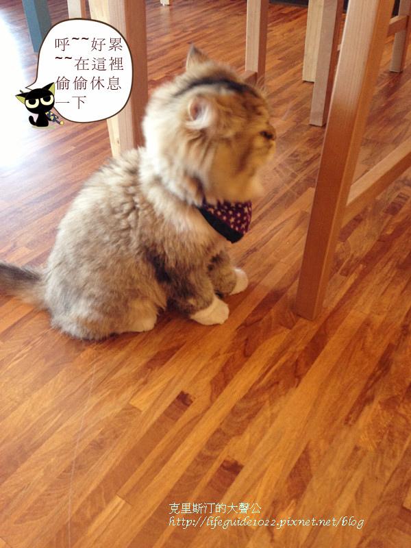 貓老闆 170_副本.jpg