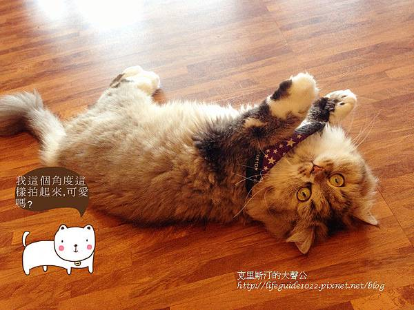 貓老闆 173_副本.jpg