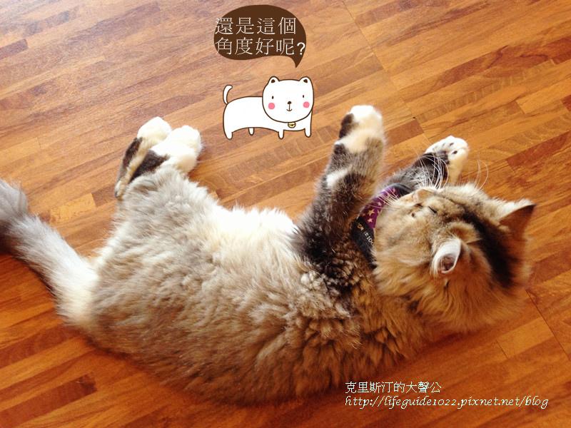 貓老闆 177_副本.jpg