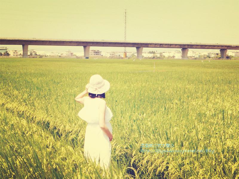 DSCN3736_副本