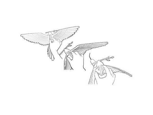 3_birdlight02.jpg