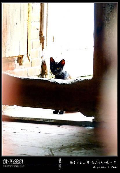 新竹-進士第_玳瑁貓:這對形跡可疑的陌生人...到底要搞啥?!