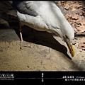 LV1-台中科博館-標本系列