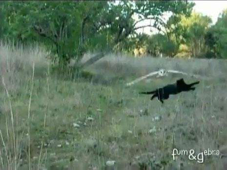 當貓頭鷹遇上貓的結果